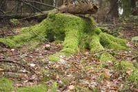 Das Thema Wald als klassenübergreifendes Projekt
